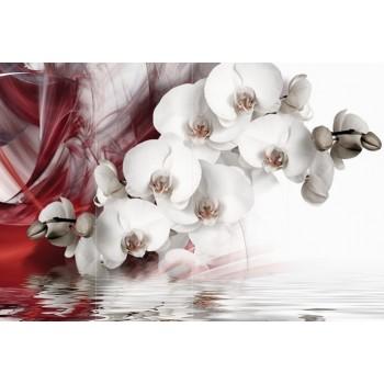"Фотопанно ""Белая орхидея"", 400х270cм"