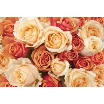 """Фотопанно """"Букет цветных роз"""", 400х270см"""