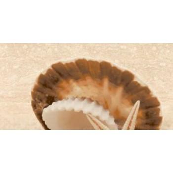 Декор массив Аликанте Жемчужина (верх, песок)